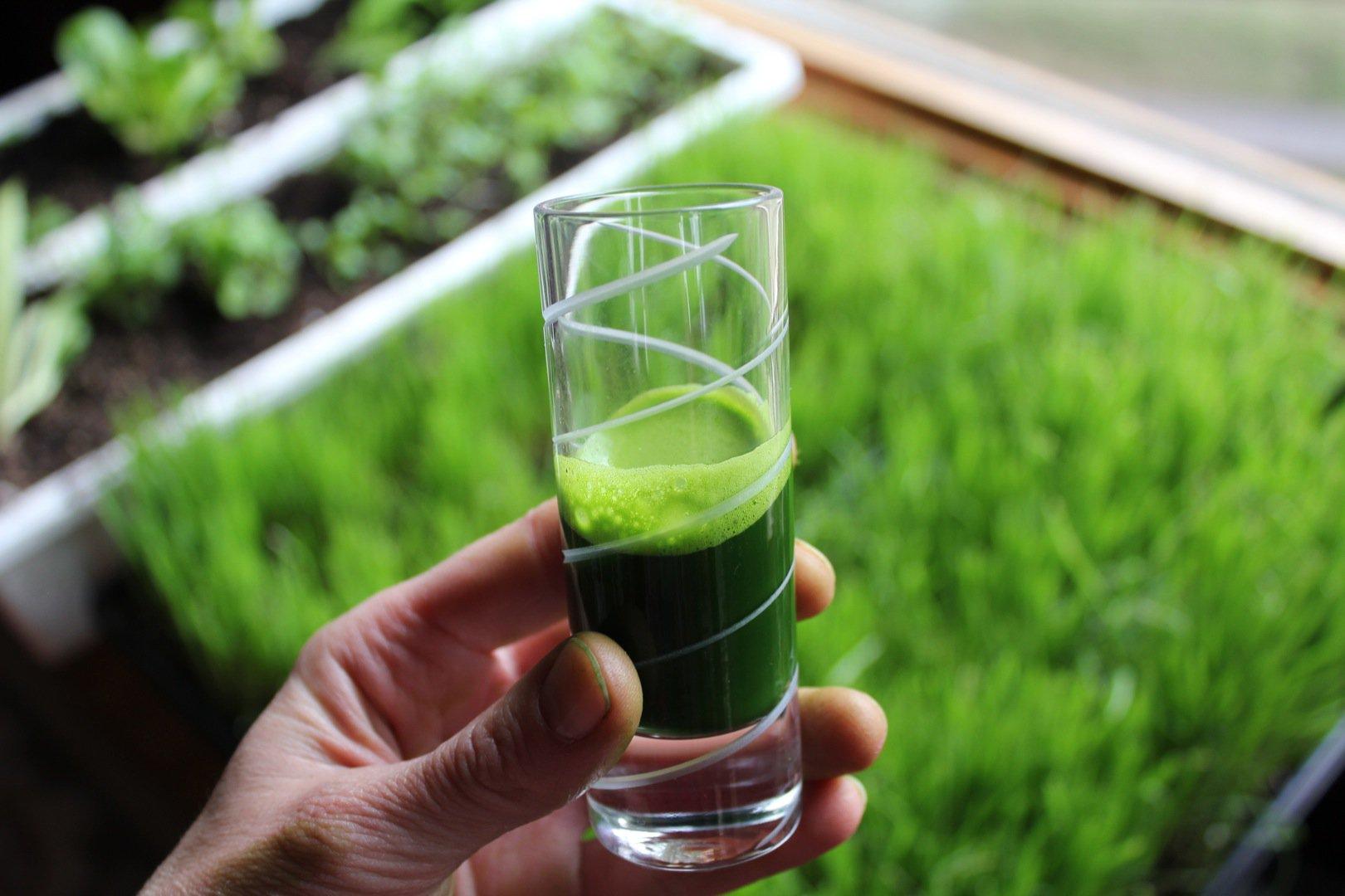 Los mejores beneficios para la salud de wheatgrass