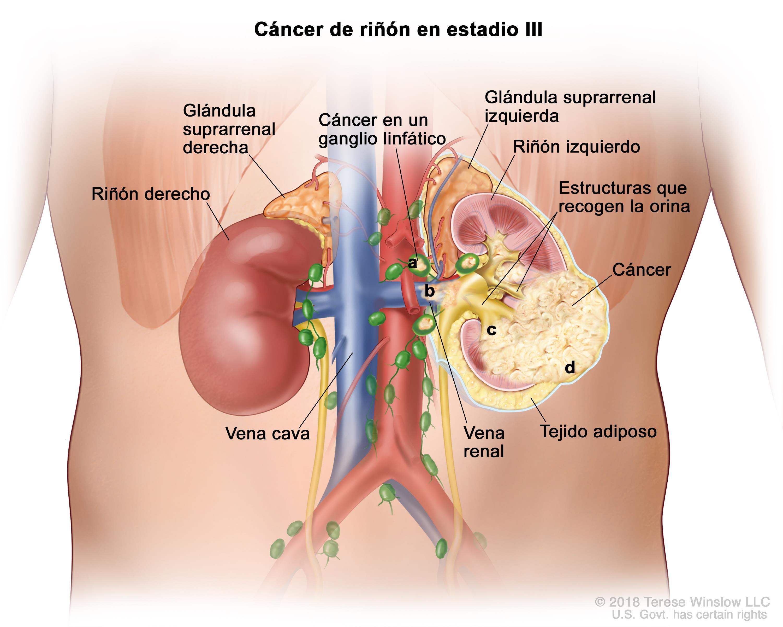donde estan ubicados los riñones